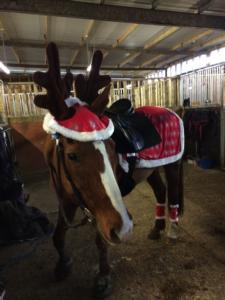 Reindeer pony